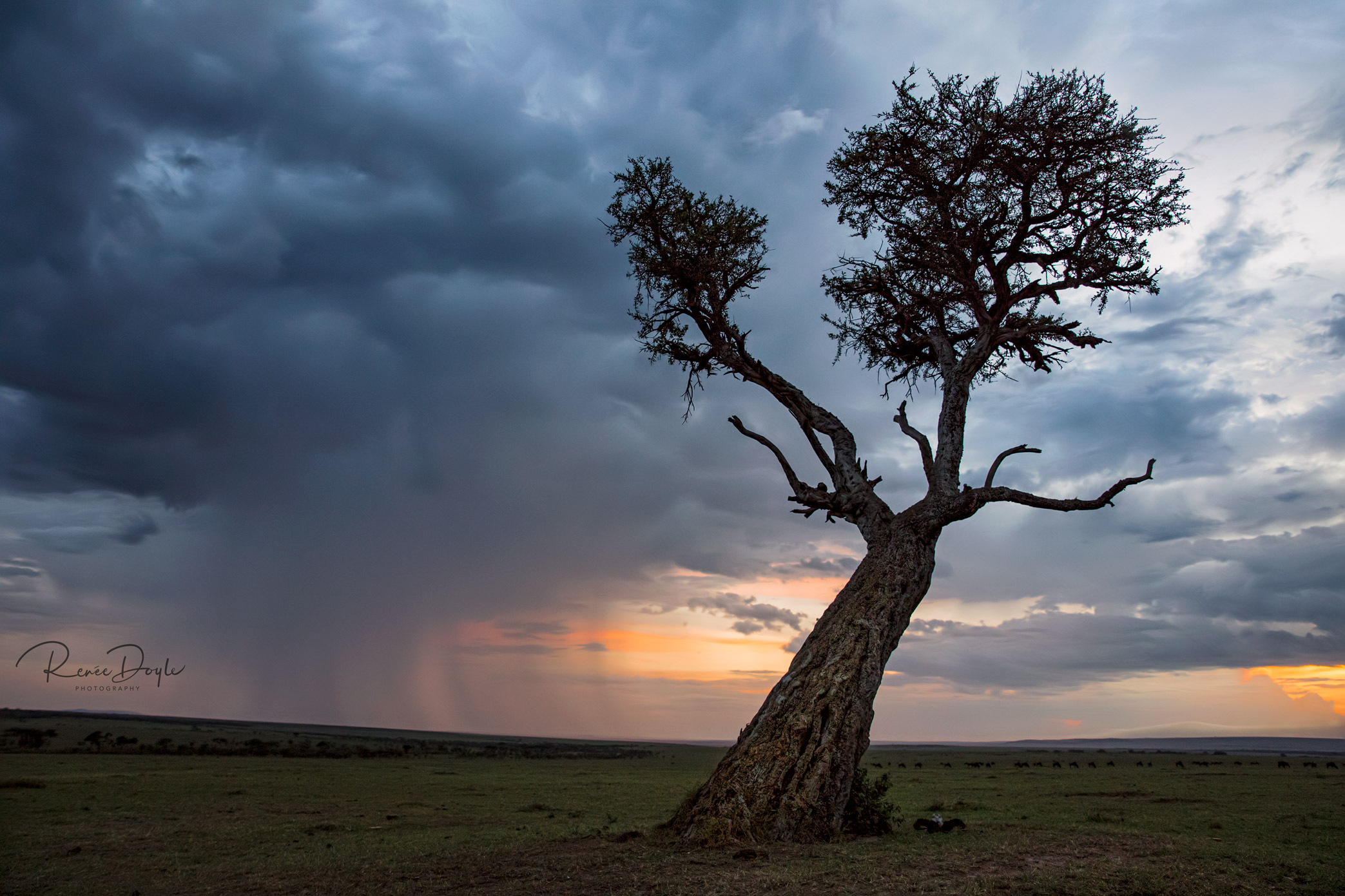 Sunset, Mara Plains, Kenya, Africa, Sundowner, Renee Doyle Photography